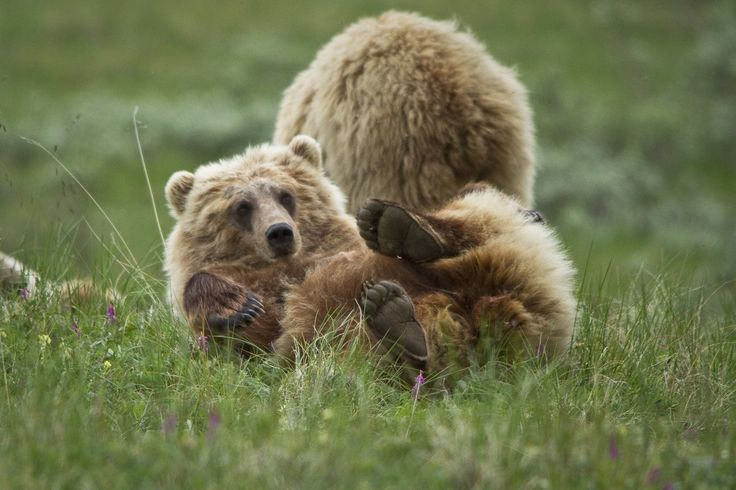 Denali National Park Alaska, USA