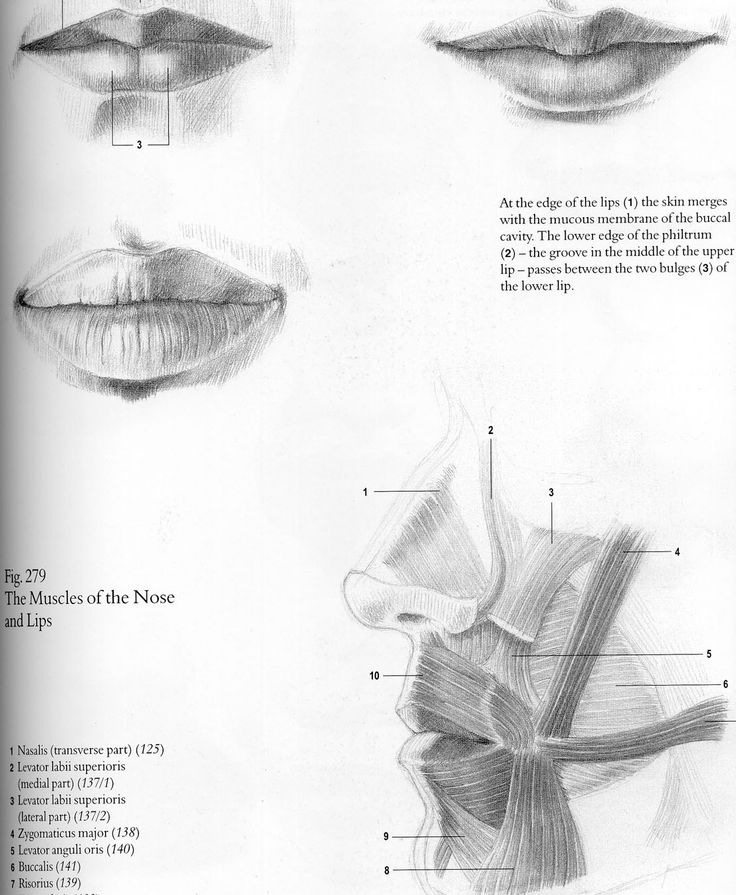 7 best Mouth anatomy images on Pinterest | Anatomy reference ...