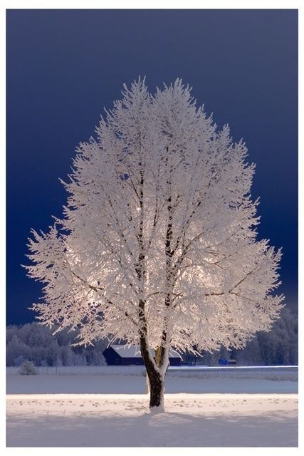 Backlight of tree is Silent Night in its own perspective