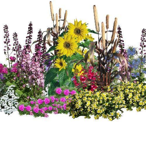"""les jardins de nos grands-mères  1_ Alysse  2_Monopsis unidentata"""" Blue Papillio  3_Mélampodium  4_Pied d'alouette  5_Reine marguerite » Pompon «  6_Millet ornementale  7_Tournesol  8_Thlaspi  9_Penstémon  10_Nigelle de damas  11_Plante aux œufs aux plat : Limnanthes douglasii  12_Pourpier à grandes fleurs"""