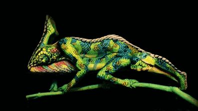WOW, this is some #art!chameleon-body-painting-optical-illusion-johannes-stotter-3