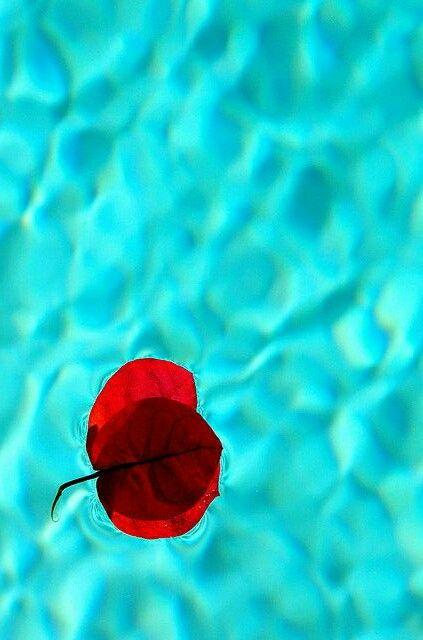 Aqua/Turquoise / Red