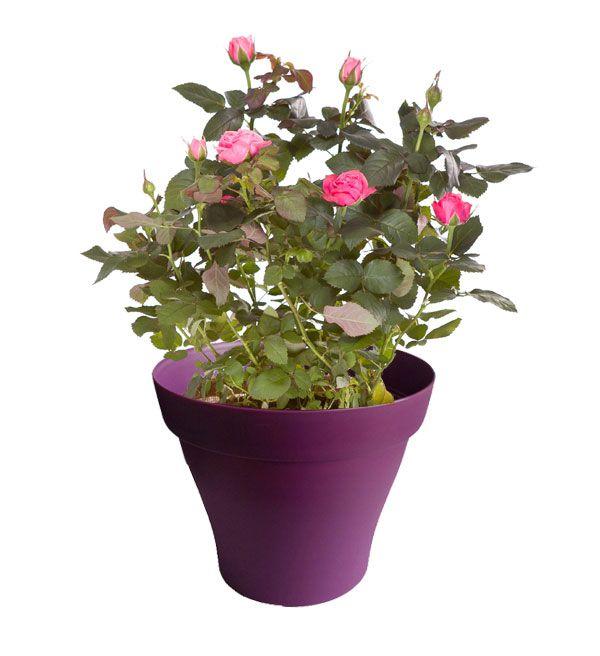 88 best Plantes d\'intérieur avec pots violet images on Pinterest ...