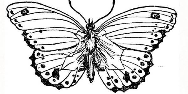 La mappa segreta nascosta in una farfalla