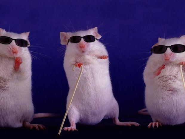 Un produit chimique extraordinaire redonne la vue à des souris aveugles