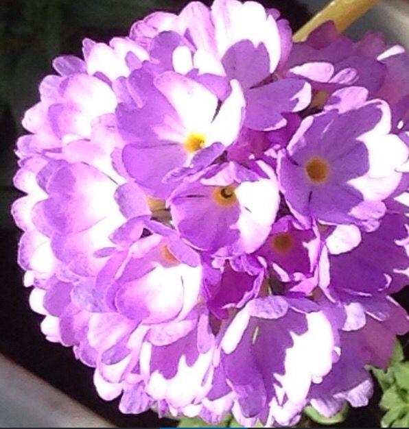 Gorgeous purple/lilac flower.