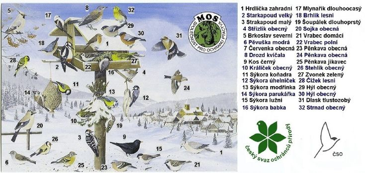 druhy ptáků, které můžete v zimě zastihnout na krmítku