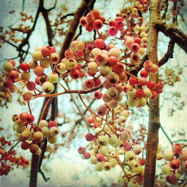 winter berries: Winter Food, Winter Berries, Bees, Winter Drinks, Yarns Colors, Food And Drinks, Drinks Recipes, Photo, Raw Food