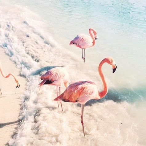 Wellcome At The Flamingos