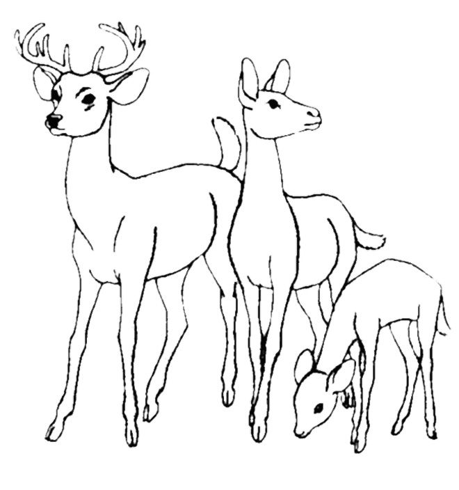 Family Deer Coloring Pages as a