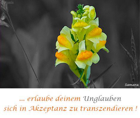 ... erlaube deinem #Unglauben sich in #Akzeptanz zu #transzendieren !