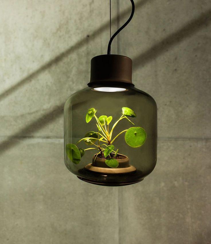 Ces lampes magiques font pousser des plantes sans eau ni lumière naturelle