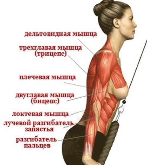 Дельтовидная мышца плеча упражнения в домашних условиях