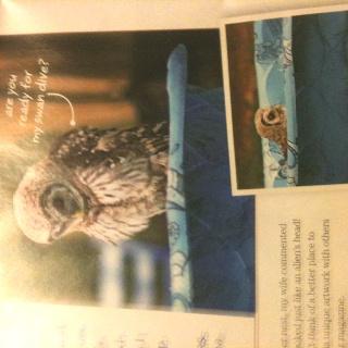 Owls caught dipping a bath in back yard .. Awwww