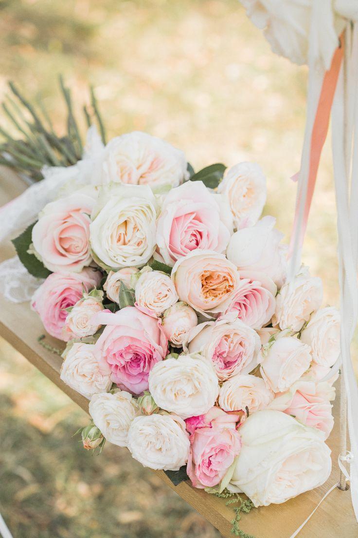 Roses roses roses!