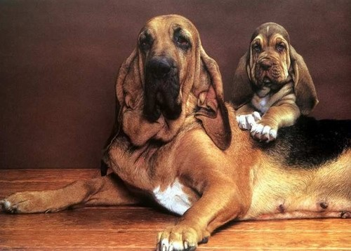 Houndly #hounds in houndtown...LOL