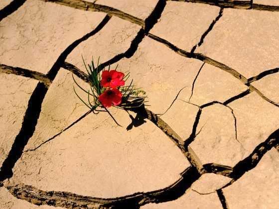La Resilienza: fiducia e flessibilità per vivere meglio