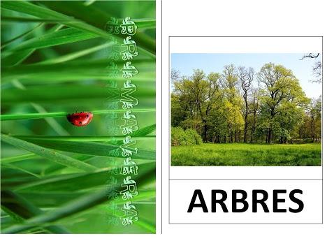Vocabulari de primavera