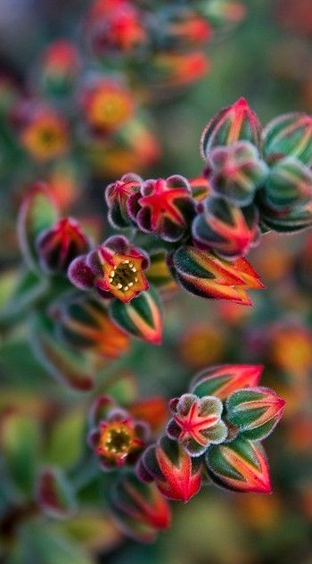 Succulents by roslyn