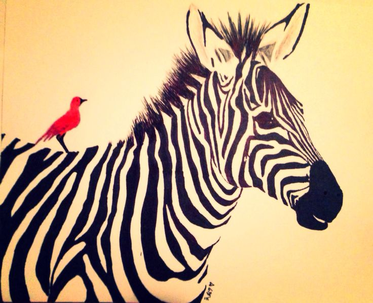 zebra drawing - photo #9