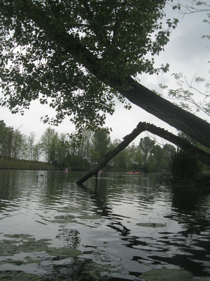 Albero si sporge sulla Piave vecchia