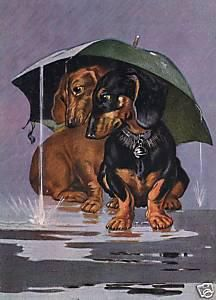 These Dachshunds aren't too keen on travel in the rain...