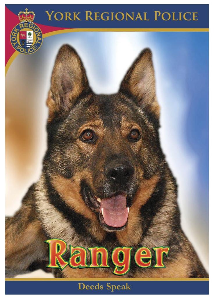 how to become dog handler rcmp