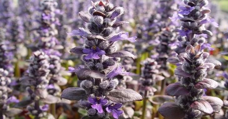 32 Best Images About Plants For Sally On Pinterest Sun
