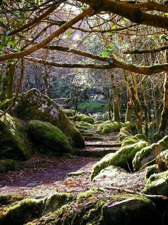 Gougane Barra Forest in County Cork is simply magical.   #GouganeBarraForest #GouganeBarra