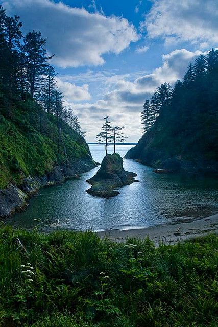 Dead Mans Cove, Cabo decepción alberga una pequeña isla con dos árboles de pino, el estado de Washington---Dead Mans Cove, Cape Disappointment shelters a small island with two pine trees, Washington State