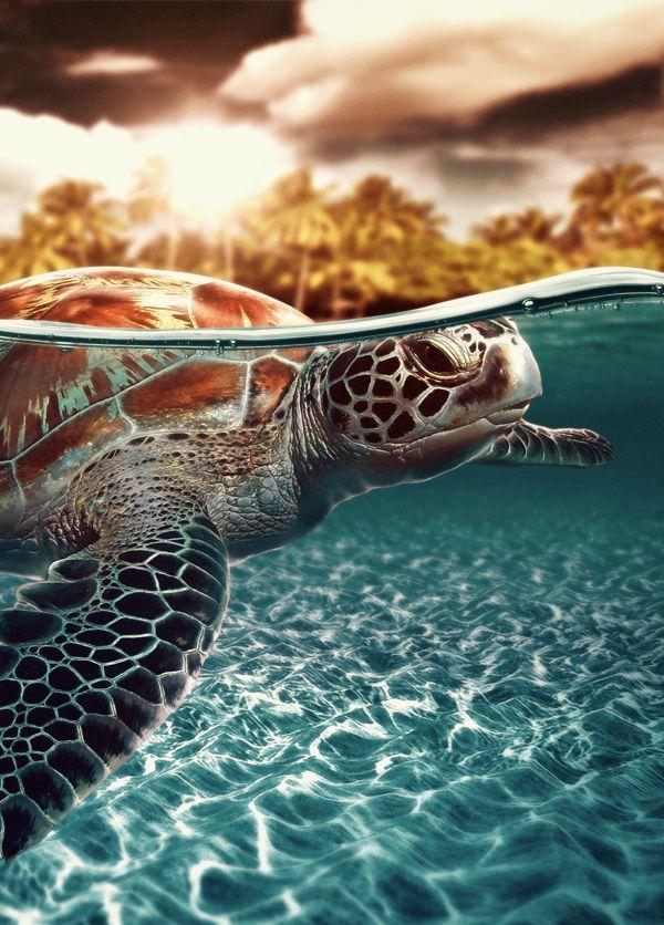 SEA TURTLE :)