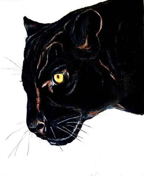 Black Panther ACEO - Big Cat Animal Wildlife Drawing - Art Print