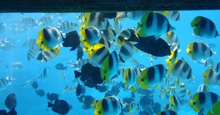 Faça você mesmo: Suporte para aquário. Se você está pensando em ter um aquário tanto de água doce quanto salgada, independentemente do seu tamanho, você vai precisar de um lugar para colocá-lo. Suportes de aquário são uma forma segura de exibir seu tanque de peixes e economizar espaço em suas bancadas. Suportes comerciais estão disponíveis construídos tanto em madeira e metal, no ...