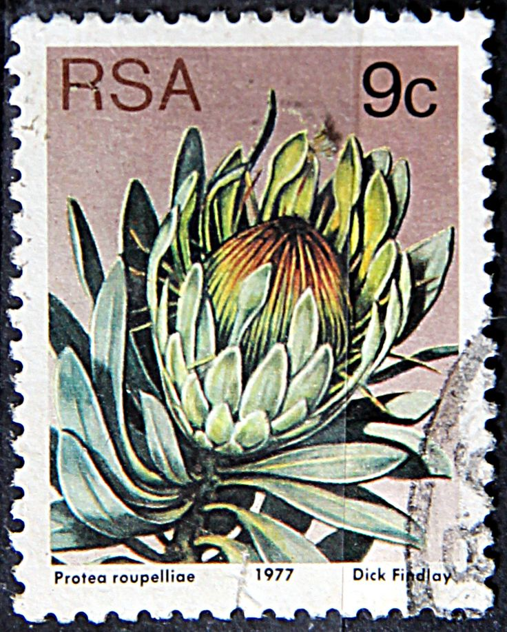 Republic of South Africa.  PROTEA ROUPELLIAE.  Scott 483 A191, Issued 1977 May 27,  Lithogravured, Perf. 12 1/2, 9c.