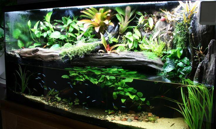 Kingsnake.com - Herpforum - Pics of My Dart Frog Vivs ...