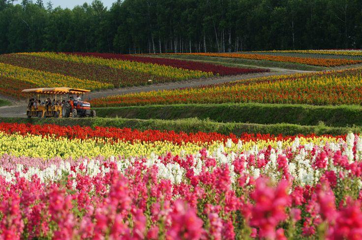 富良野・富田農園