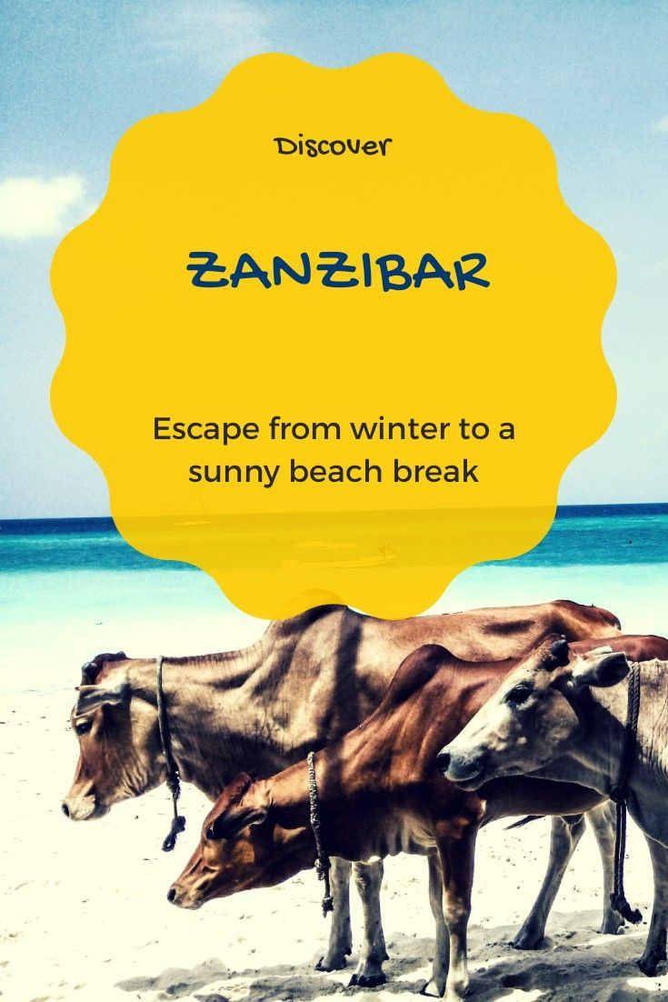 Winter escape in Sunny Zanzibar #Zanzibar #africa #beach