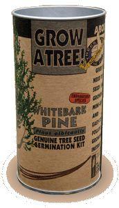 Tree Growing Kit Whitebark Pine