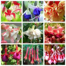 100 Pçs/saco Único Vermelho Fúcsia Perene Flor Sementes Sementes de Plantio de Flores Em Vaso de Flores DIY Flor de Sino Multicolor(China (Mainland))
