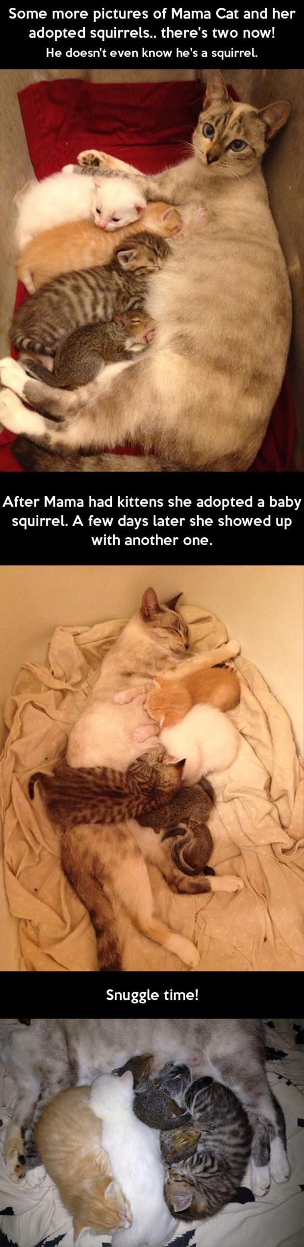 Mama kitty, baby kitties, baby squirrels.  Just a big, happy family.  <3