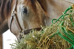 Hay: To Soak or Not to Soak? - TheHorse.com   Find out if soaking your horse's hay might be a good option, or whether unsoaked hay is the way to go. #horses #feedinghorses #hay