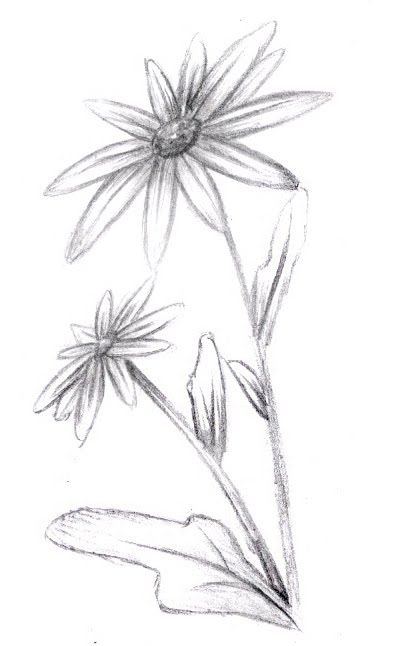 Easy pencil drawings flowers the image for How to draw a pretty flower easy