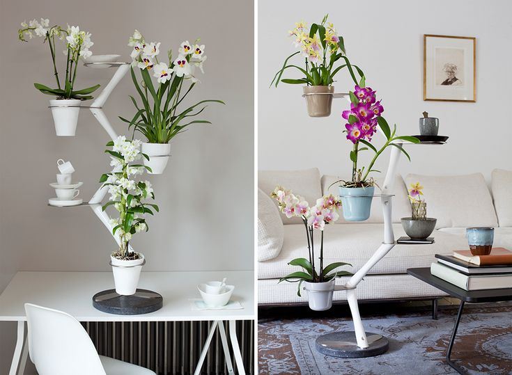 De Orchid twister van interieur ontwerper Francois hannes.