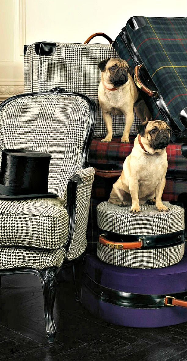 I love the menswear inspired furniture. And I knew you'd like the pugs. Ralph Lauren Home