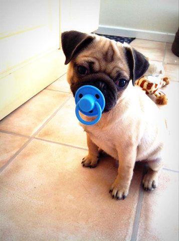 Cachorros fotografados com brinquedos caricatos são a prova de que a zueira nunca acaba | Virgula