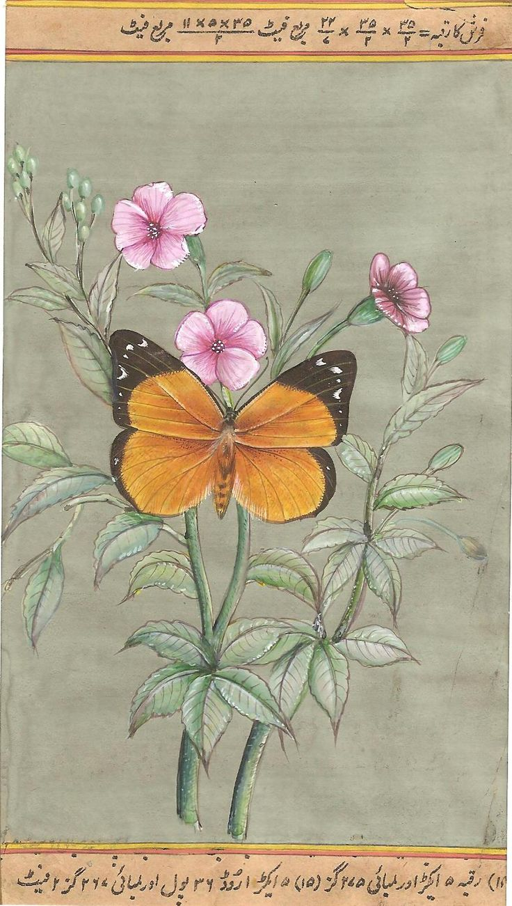 Butterfly Art Handmade Indian Miniature Nature Wild Life Watercolor Painting. In this wonderful artwork the famous Jaipur wild life miniature artist, Mr. Narendra Katara, has placed a colorful butterfly & plant against a solid background.