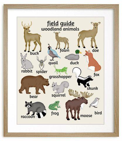 Field Guide to Woodland Animals art, features moose, bear, deer, duck, fox, raccoon and more. Nursery inspiration, #Nursery #art
