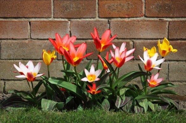 Így lehet álomszép a kerted egész évben