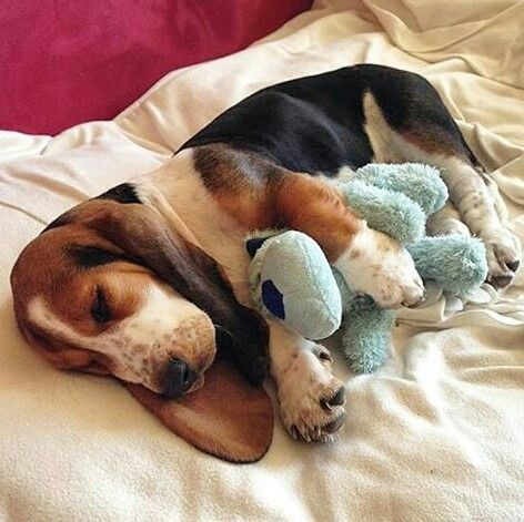 Scottsdale Therapy Dog Training