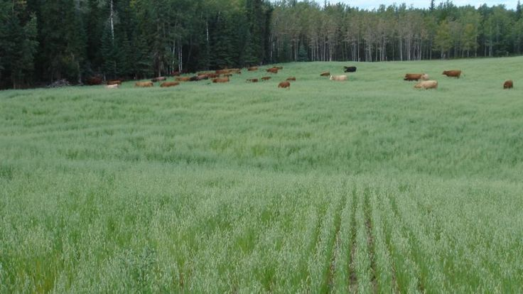 Property for sale in BC Canada.- the view of the pasture! Read more, share & see the video. #ranchforsale #landforsale #lifestylehomes #inspired #farmland #organicfood